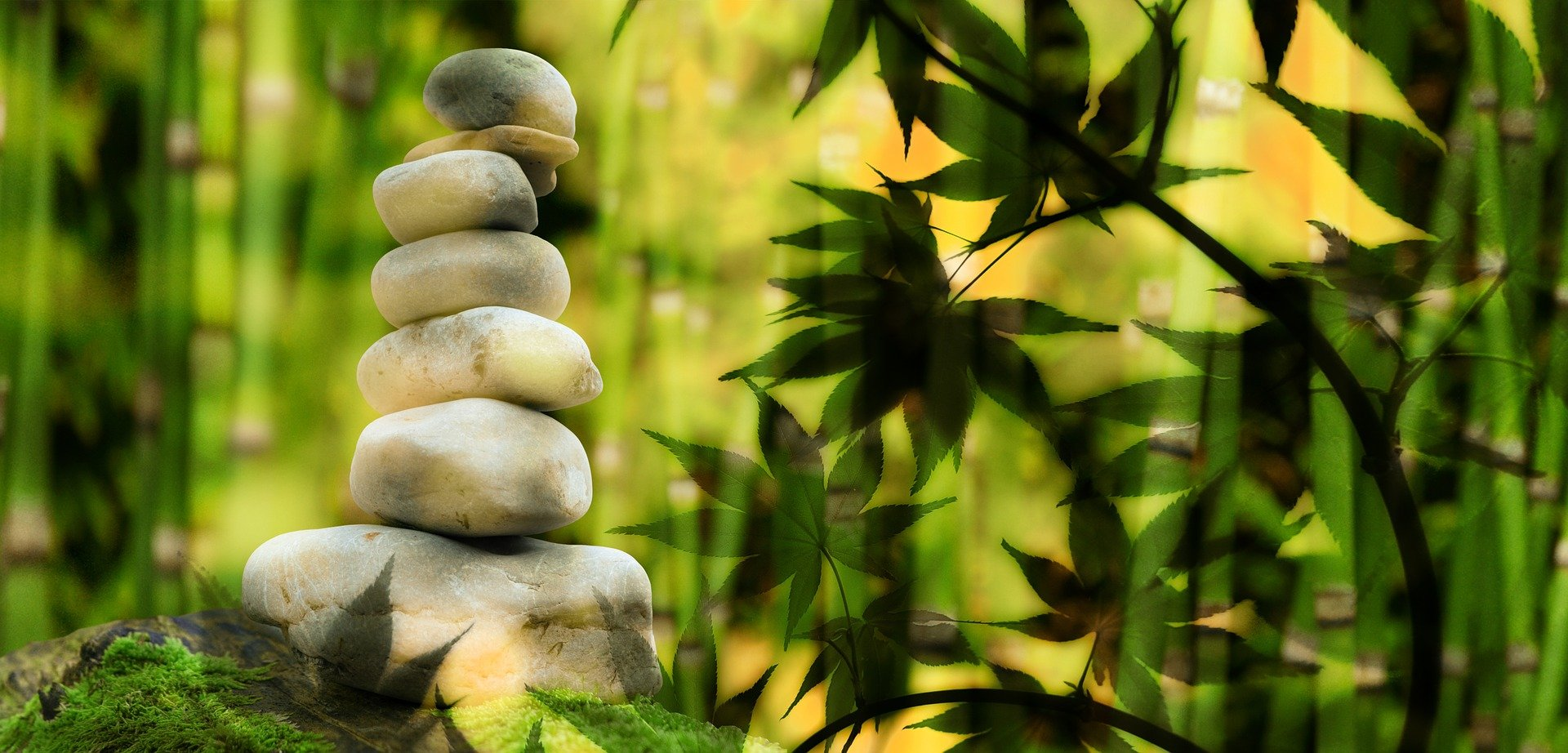 wellness, trees and stones