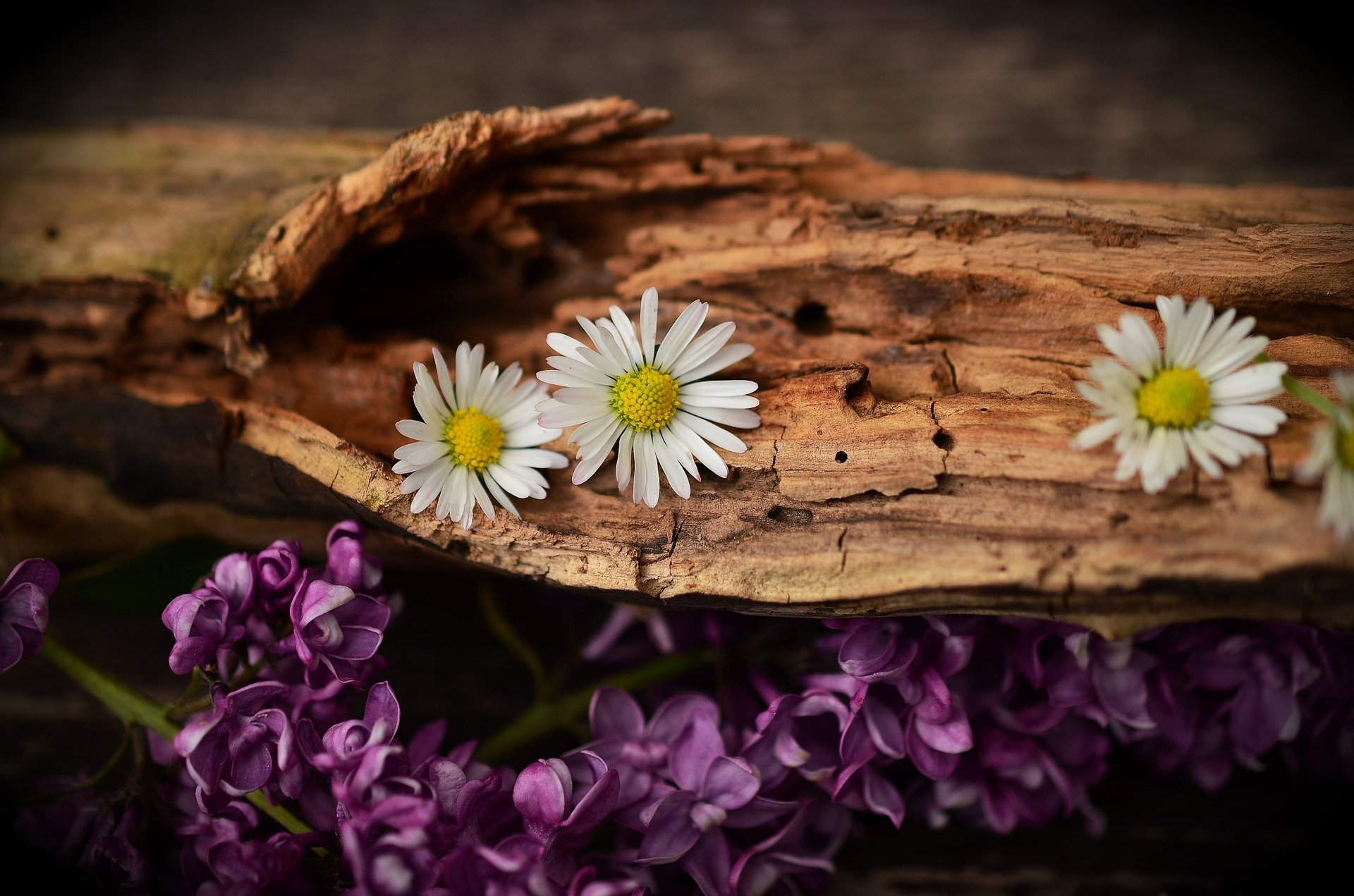wood with flowers